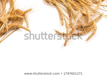 búza · termékek · izolált · fehér · sütik · ravioli - stock fotó © compuinfoto