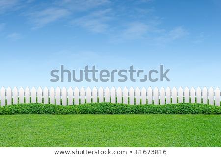 Ogrodzenia Błękitne niebo drewna zielona trawa pierwszy plan wyblakły Zdjęcia stock © Lightsource
