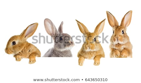 Stockfoto: Easter Rabbit Blank Sign