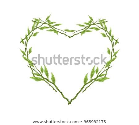 Symbolisch groene cactus blad dode plant Stockfoto © sarahdoow