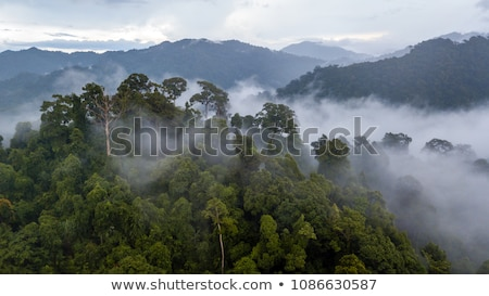 Storm Clouds over the Amazon Rain Forest Stock photo © wildnerdpix