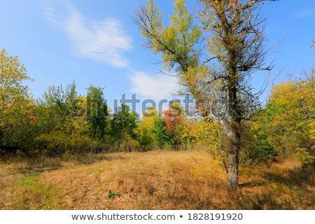изолированный · тополь · дерево · белый · древесины · зеленый - Сток-фото © lunamarina