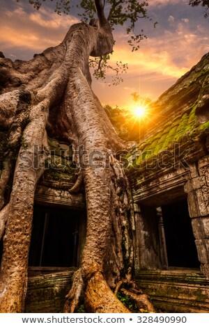 Сток-фото: дерево · храма · огромный · джунгли · Ангкор · Камбоджа