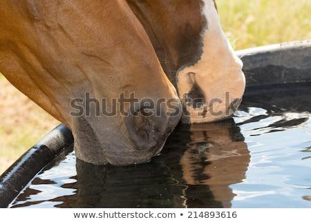 donkere · paard · schaken · spel · zwarte · houten - stockfoto © meinzahn