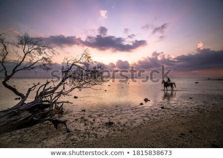 Nyugalmas higgadt víz felhők nap naplemente Stock fotó © chris2766