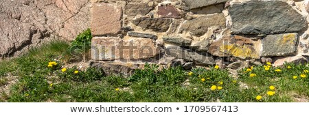 retro vintage bricks wall and dandelions stock photo © vavlt