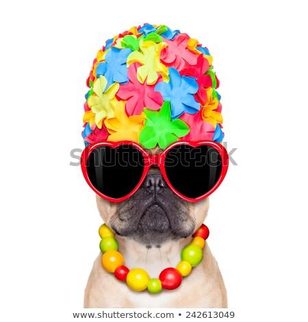 Cão maiô inglês buldogue cachorro Foto stock © willeecole
