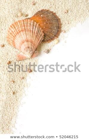 海 · シェル · グループ · 熱帯 · コレクション - ストックフォト © hofmeester