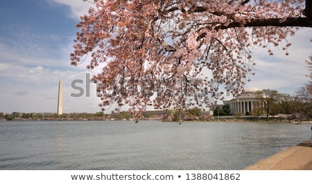 Flowers around the Washington Memorial Stock photo © rmbarricarte