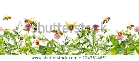butterfly and bees on flower Stock photo © sirylok