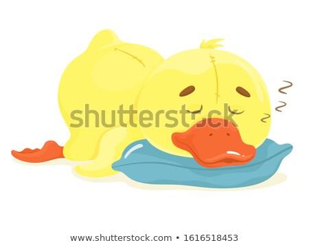 Küçük sevimli ördek yavrusu uyku bebek kuş Stok fotoğraf © leventegyori