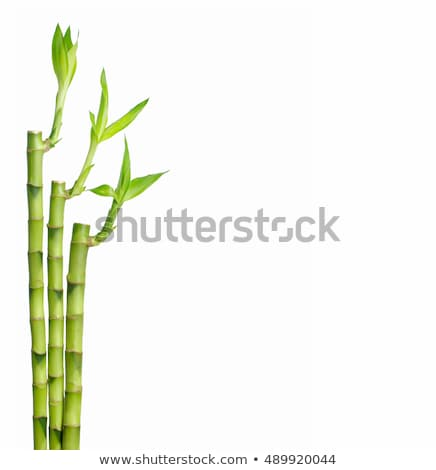 Green bamboo stems with leaves - grove background Stock photo © Winner