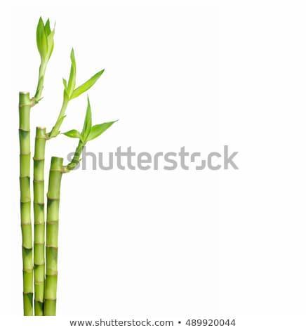 zöld · bambusz · növekvő · friss · levelek · copy · space - stock fotó © winner