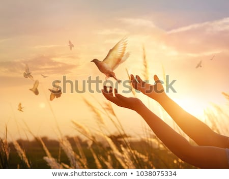 Concept Of Peace Stock photo © Lightsource