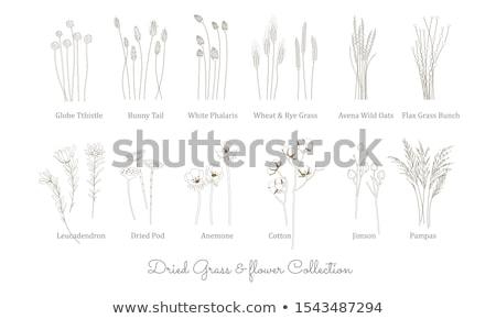 bunny in grass vector stock photo © beaubelle