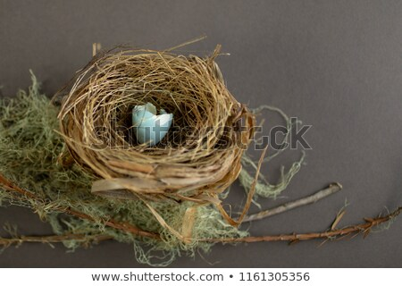 Blue bird hatching egg in nest Stock photo © bluering