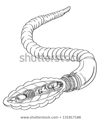 Regenworm anatomie schets schets hart mond Stockfoto © bluering