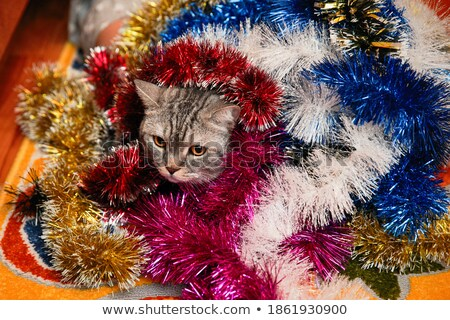 Gray cat sitting in basket with Christmas tinsel and looking up Stock photo © BSANI