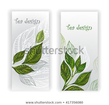два Баннеры листьев чай зеленый серый Сток-фото © blackmoon979