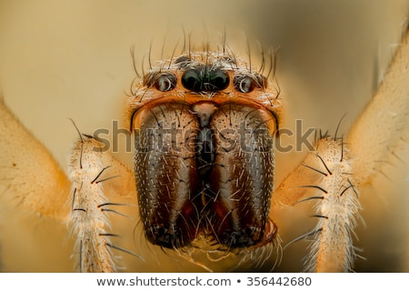 веб · Spider · черный · белый · лапа - Сток-фото © oleksandro