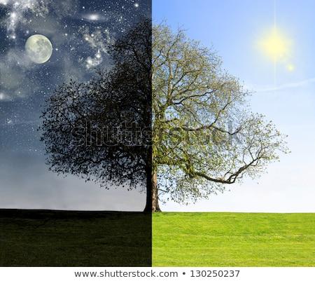 day vs night Stock photo © psychoshadow
