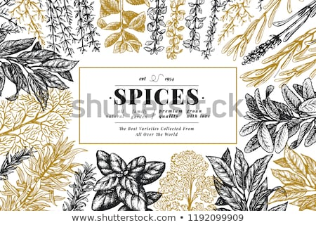 Culinary herbs Stock photo © joker