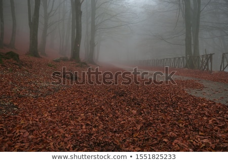 Autumn road in Italy with fog in the morning Stock photo © stefanoventuri