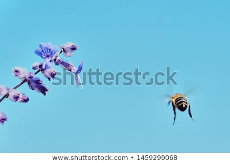 Abelha voador céu insetos verão natureza Foto stock © Olena