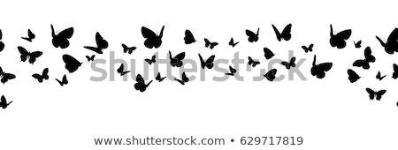 conjunto · voador · borboleta · silhueta · isolado · vetor - foto stock © orensila