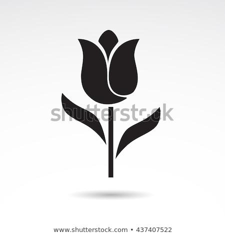 Foto stock: Vector · establecer · colorido · tulipán · iconos · resumen