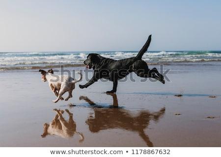 かわいい · 犬 · 水 · 春 · 犬 - ストックフォト © Enjoylife