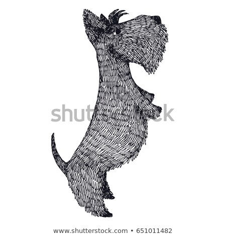 Terriër hondenras baby ontwerp leuk zwarte Stockfoto © tigatelu
