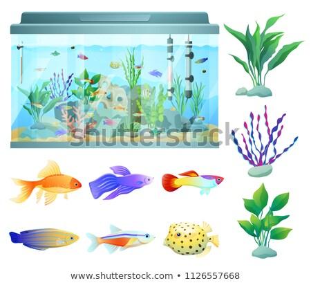 sea plants and limless animals vector illustration stock photo © robuart