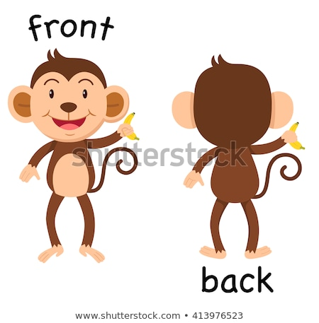 Angielski naprzeciwko słowo front powrót ilustracja Zdjęcia stock © bluering