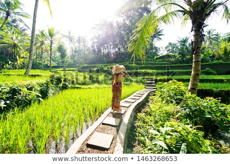 Young woman on Green cascade rice field plantation at Tegalalang terrace. Bali, Indonesia with sunli Stock photo © galitskaya
