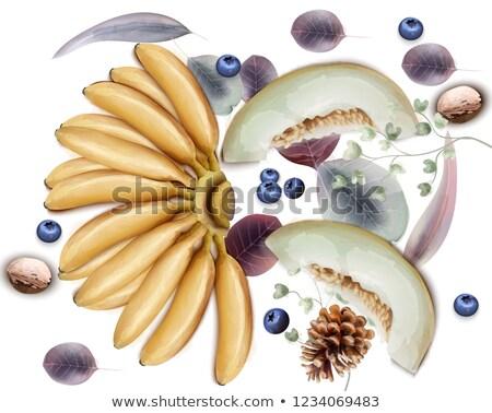 Mirtilli vettore acquerello esotiche frutti Foto d'archivio © frimufilms