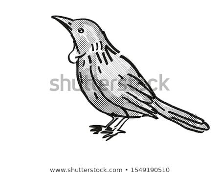 Nova Zelândia pássaro desenho animado retro desenho estilo Foto stock © patrimonio
