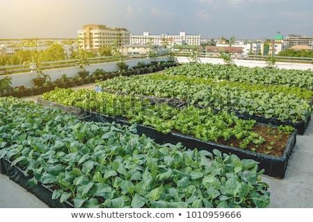 City Garden Stock photo © naffarts