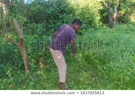 Mosquitoes around a man on the nature on the field Stock photo © galitskaya