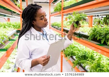 Afrikai női biológus irat áll polcok Stock fotó © pressmaster