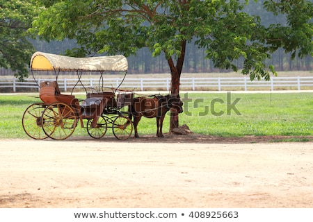 green horse drawn buggy stock photo © backyardproductions