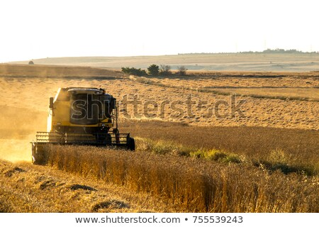 Harvesting time with a combine stock photo © sielemann