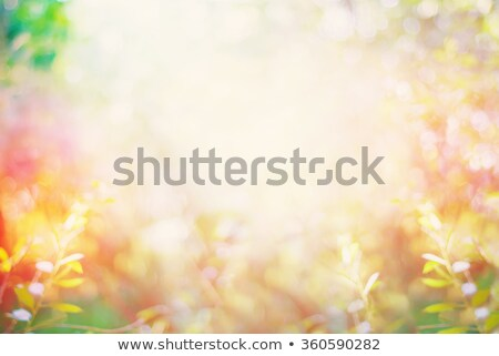 Abstract background of yelow flowers Stock photo © boroda