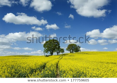 Stock photo: rape field and tree