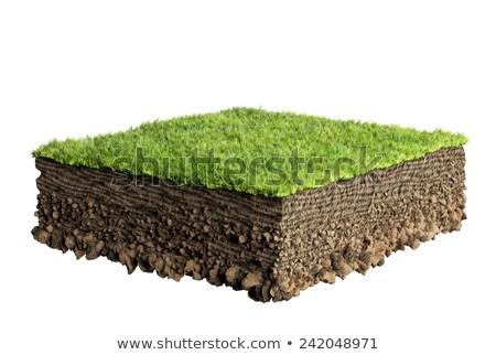 cebollas · suciedad · alimentos · hoja · verde · tierra - foto stock © smithore