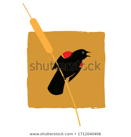 Rouge aile blackbird Photo stock © devon