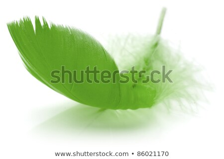 green feather in soft-focus view. Close-Up. With Stock photo © shutswis