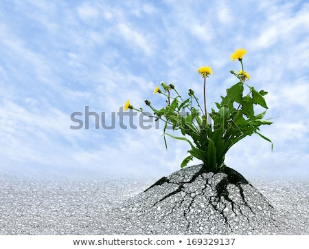 unstoppable determination stock photo © lightsource