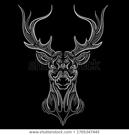Szarvas fej vektor állat illusztráció póló Stock fotó © Hermione