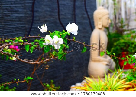 Child with bunch of bougainvillea Stock photo © dashapetrenko